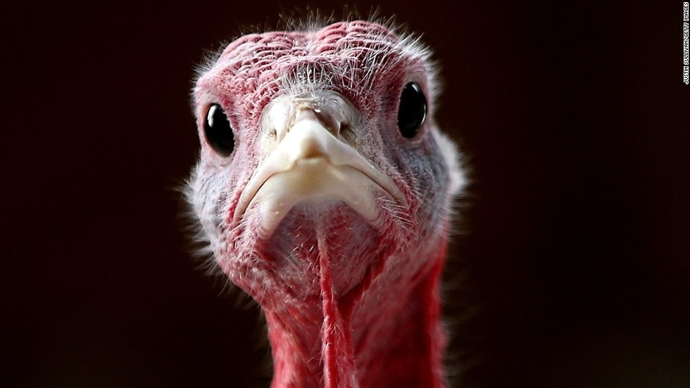 Behind the Turkey: 10 Fun Facts We Bet You Didn't Know About Thanksgiving Day